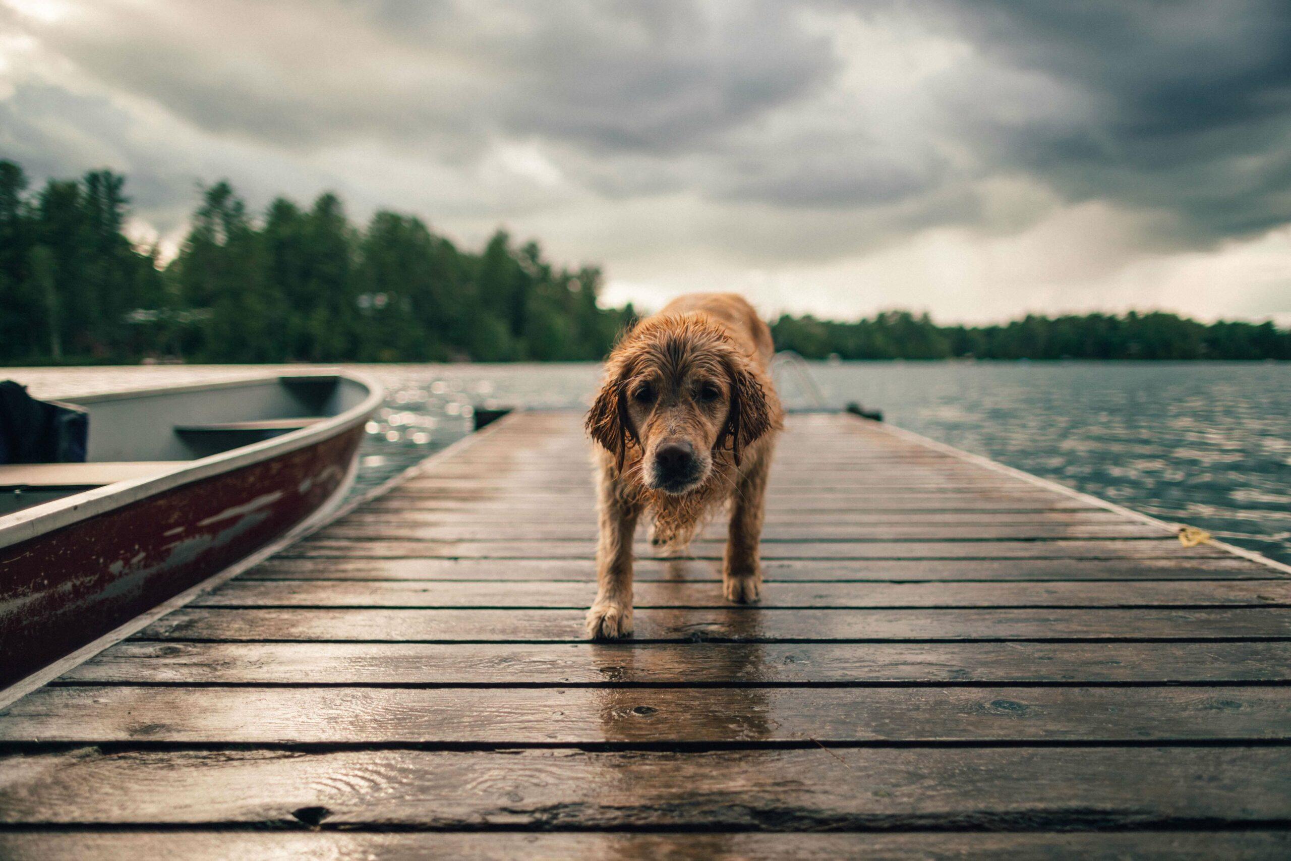 Un maître et son chien réunis grâce au Pet Tracker Invoxia